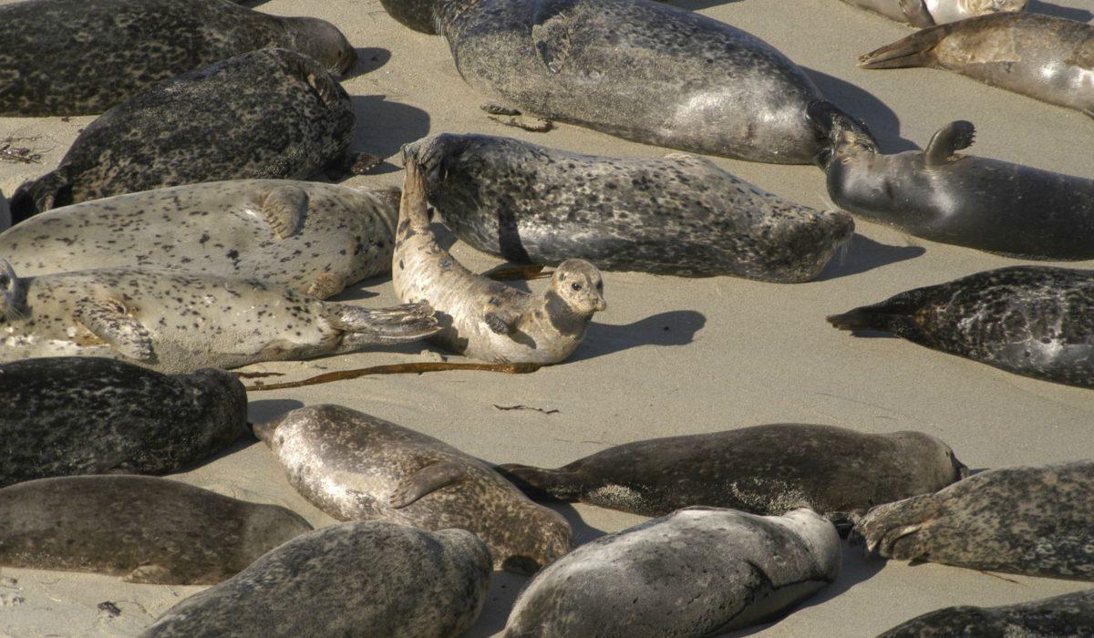 La Jolla Homes For Sale Seals
